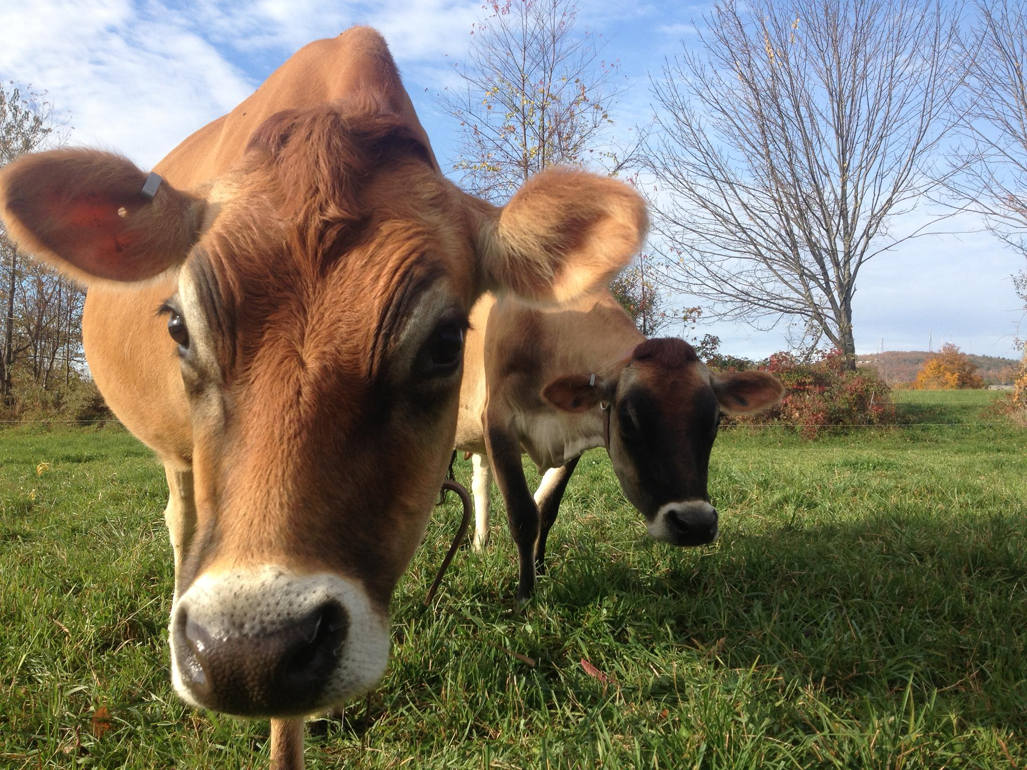 Organic Farm Succession May Be Key To Future Of Dairy