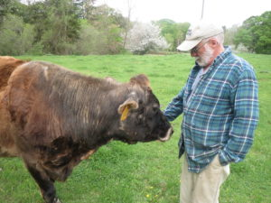 Ernie Vose and his cow, Jewel on his farm in Walpole. Photo by Stacy Gambrel.