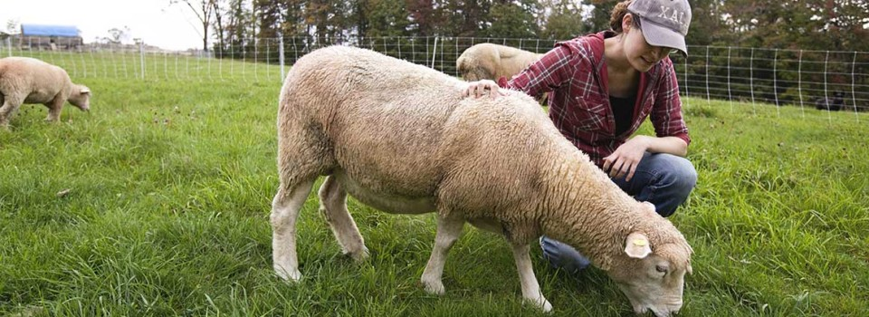 Female-farmer-sheep