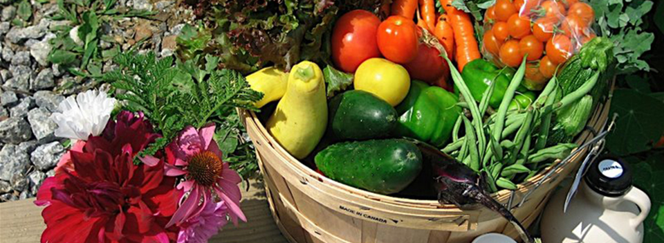 Homepage-Slider-vegetables-in-basket