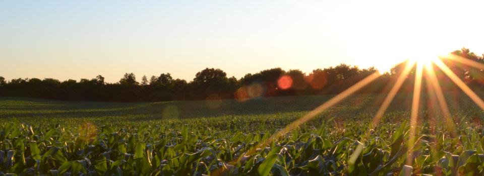 Homepage-slider-cornfield-sunset