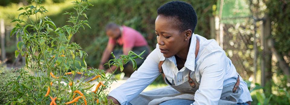 Homepage-slider-diverse-female-farmer-plant-960x350