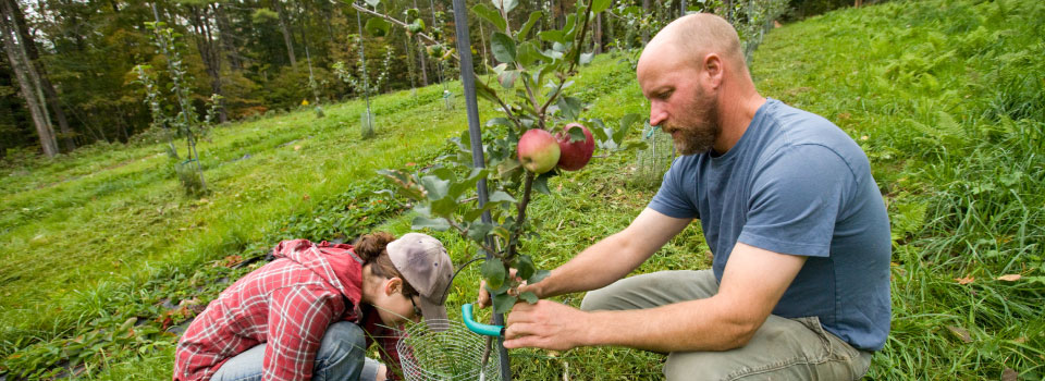 Homepage-slider-farming-couple-apple-tree960x350