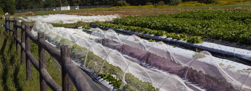 Homepage-slider-green-wagon-farm