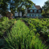 LFG-UrbanFarming-Dorchester-photo-credit-EcoPhotography