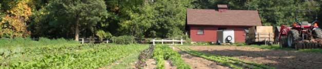 Murdock-Farm-Tractor-Field