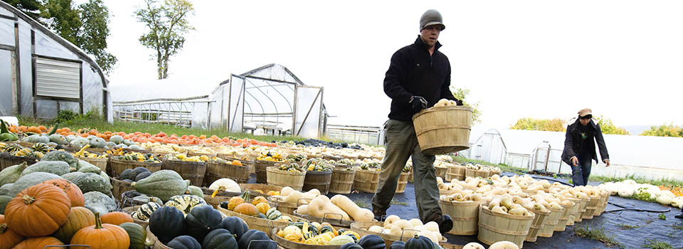 farmers-fall-harvest-baskets