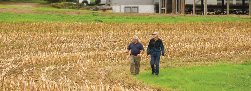Farmers walking back from field (CT)