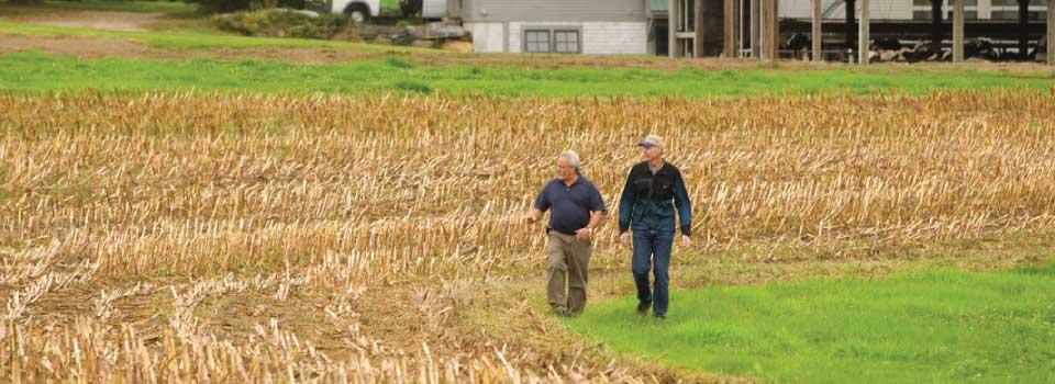 Farmers walking back from field (CT)