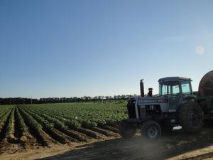potato-farm-tractor-bliss-farm