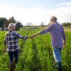 farming, gardening, agriculture and people concept - happy senior couple holding hands at summer farm