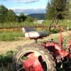 tractor-crop-byJimHafner