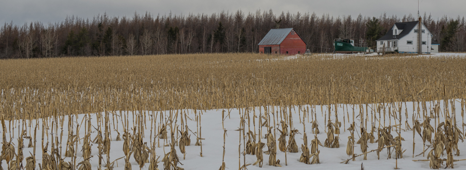 winter-corn-field-creative-ommons-license-shawn-harquall